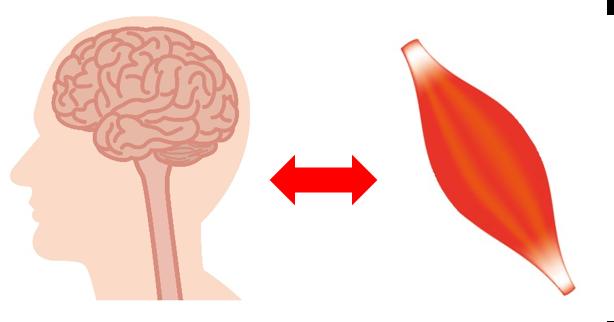 脳梗塞リハビリ改善イメージ